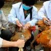 中国多地备战H7N9禽流感